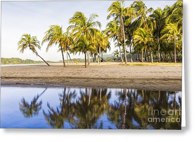 Reflections Of Sky In Water Greeting Cards - Palm Beach Reflection Greeting Card by Oscar Gutierrez