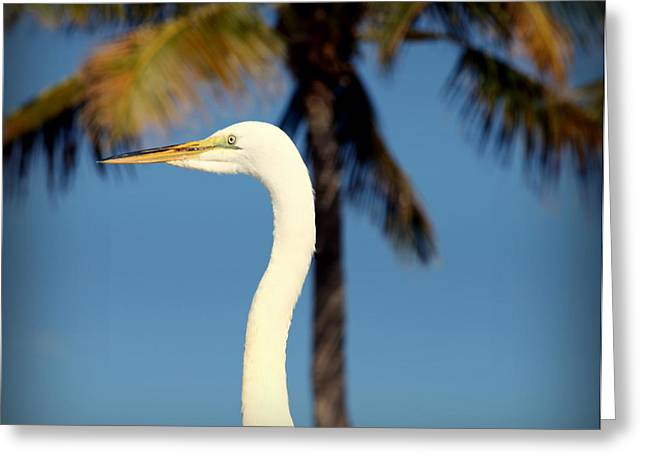 Nautical Birds Greeting Cards - Palm Egret Greeting Card by Karen Wiles