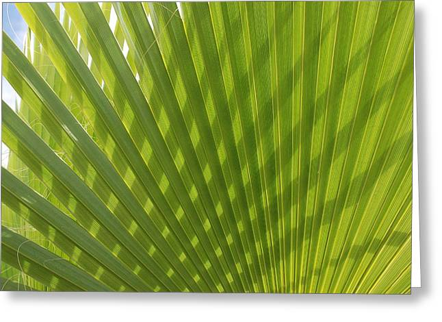 Palm Fingers Greeting Card by Dallas Hyatt