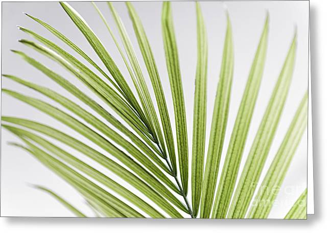 Frond Greeting Cards - Palm leaf Greeting Card by Elena Elisseeva