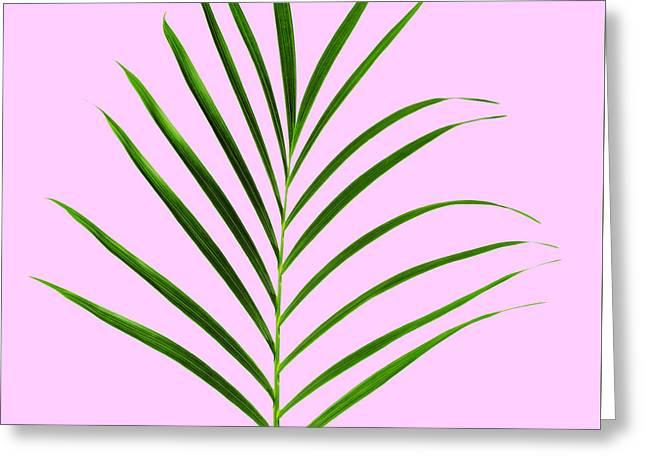Palm Leaf Greeting Card by Tony Cordoza