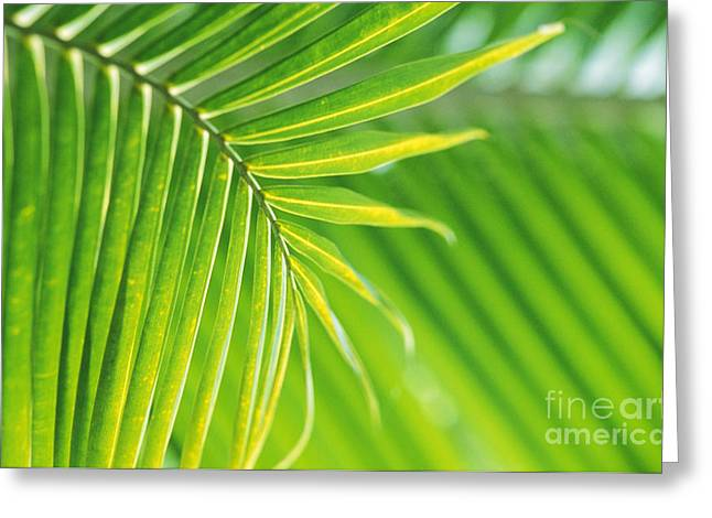 Moist Greeting Cards - Palm Leaves Greeting Card by Bill Brennan - Printscapes