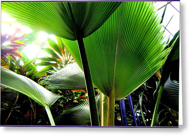 Tropical Photographs Digital Greeting Cards - Palm Magic Greeting Card by Mindy Newman