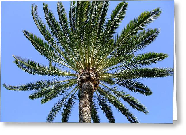 Palm Tree Greeting Cards Greeting Cards - Palm Greeting Card by Mindy Newman