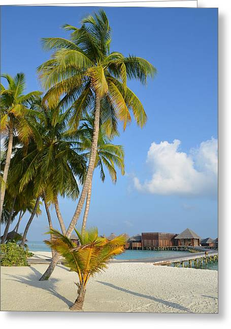 Palm Paradise Greeting Card by Corinne Rhode