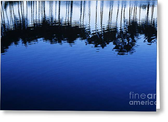 Glassy Lake Surface Greeting Cards - Palm Reflections Greeting Card by Mary Van de Ven - Printscapes