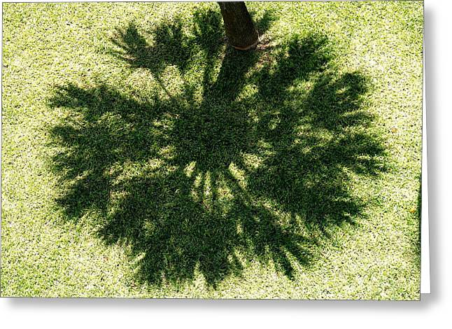 Garden Scene Photographs Greeting Cards - Palm Shadow Greeting Card by Richard Mansfield