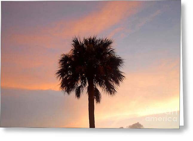 Palm Tree Greeting Cards Greeting Cards - Palm Sky Greeting Card by David Lee Thompson