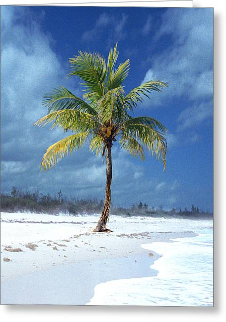 Tropical Island Pyrography Greeting Cards - Palm Tee In The Sand Greeting Card by Richard Nickson