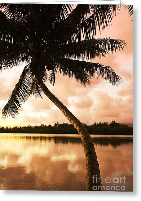 Amazing Sunset Greeting Cards - Palm tree at sunrise Greeting Card by Dana Edmunds - Printscapes