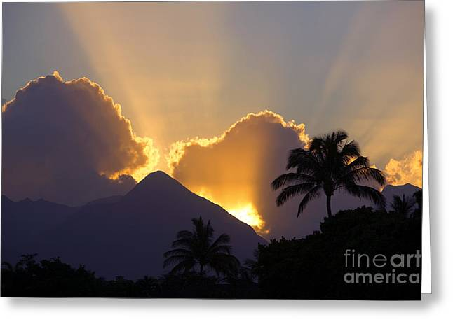 Amazing Sunset Greeting Cards - Palm Tree At Sunset Greeting Card by Ron Dahlquist - Printscapes
