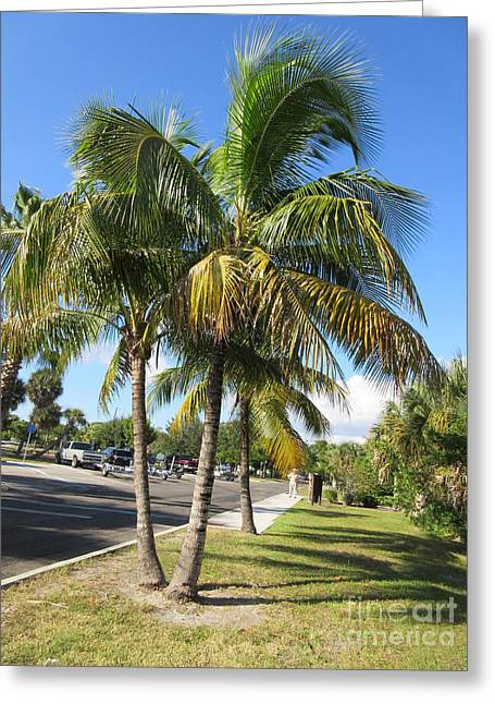 Charlotte Greeting Cards - Palm Tree Greeting Card by Frederick Holiday