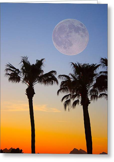 Palm Tree Greeting Cards Greeting Cards - Palm Tree Full Moon Sunset Greeting Card by James BO  Insogna