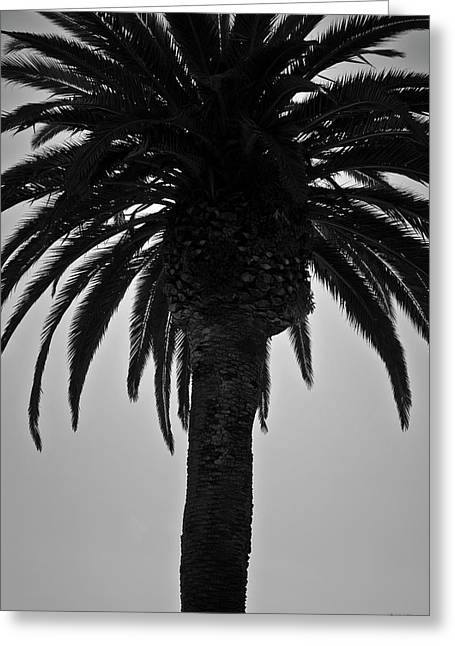 Dave Greeting Cards - Palm Tree II BW Greeting Card by David Gordon