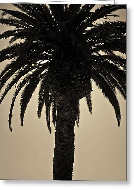 Warm Tones Greeting Cards - Palm Tree II Toned Greeting Card by David Gordon