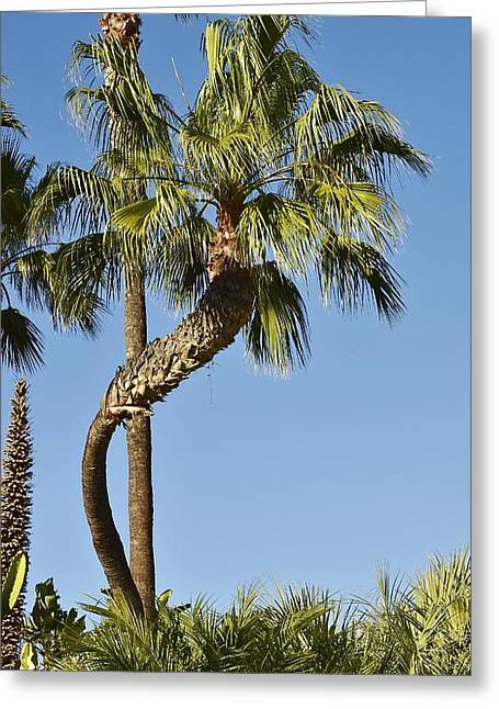 """""""strange Trees"""" Greeting Cards - Palm Tree Needs A Chiropractor Greeting Card by Linda Brody"""