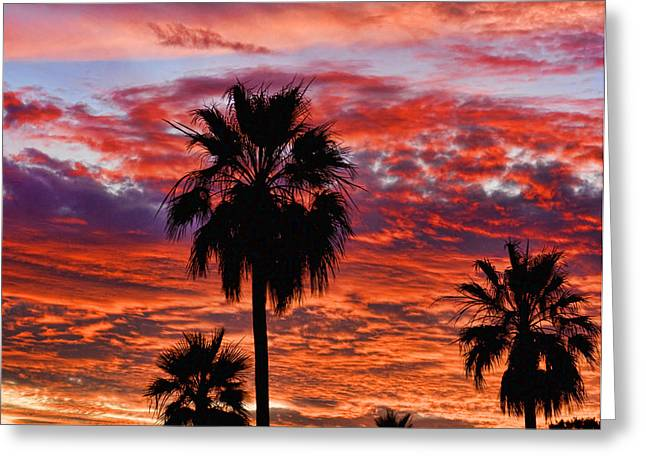 Palm Tree Sunset Greeting Card by James BO  Insogna