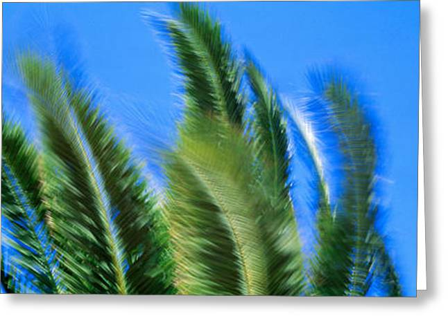 Palms. Palm Trees Greeting Cards - Palm Tree Top In The Wind Greeting Card by Panoramic Images