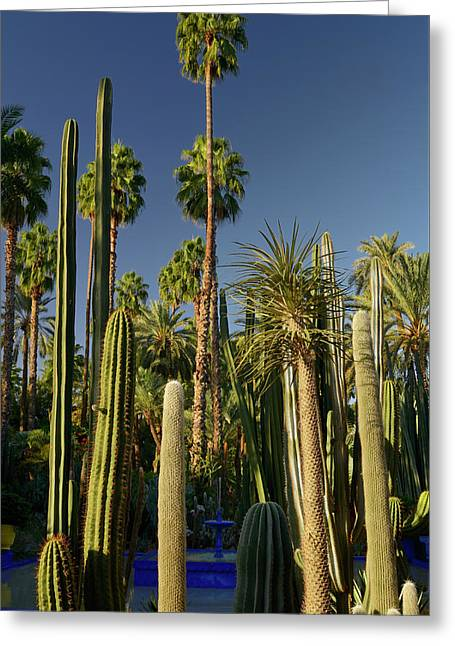Palm Trees And Cacti With Blue Fountain At Majorelle Garden In M Greeting Card by Reimar Gaertner