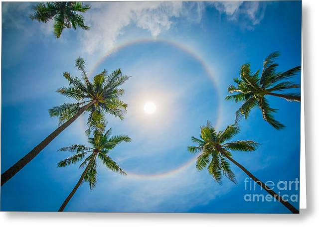 Haze Greeting Cards - Palm trees and sun halo Greeting Card by Delphimages Photo Creations