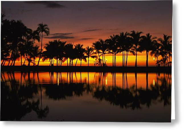 Beauty Greeting Cards - Palm Trees And Sunset Landscape Greeting Card by Gillham Studios