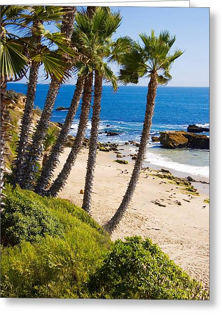 Spectacular Ocean Vistas Greeting Cards - Palm trees at Heissler Park in Laguna Beach California USA Greeting Card by Utah Images