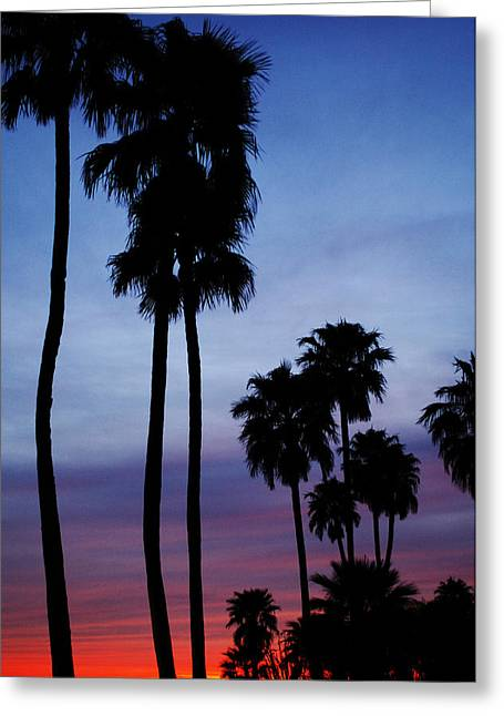 Palm Trees At Sunset Greeting Card by Jill Reger