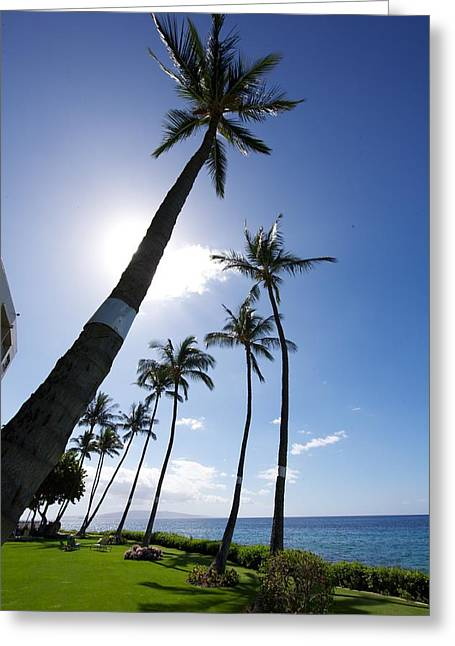 Beach Scenery Greeting Cards - Palm Trees Greeting Card by Ivan SABO