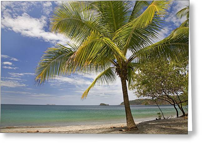 Beach Photography Greeting Cards - Palm Trees Line Penca Beach Costa Rica Greeting Card by Tim Fitzharris
