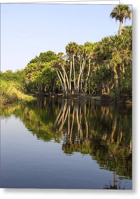 Trees Reflecting In Water Greeting Cards - Palm Trees reflections Greeting Card by Sally Weigand
