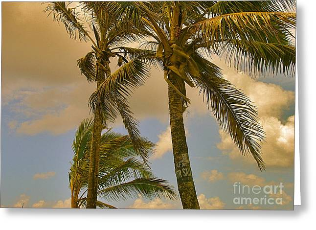 Silvie Kendall Photographs Greeting Cards - Palm Trees Greeting Card by Silvie Kendall