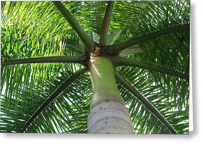 Unbrella Greeting Cards - Palm Unbrella Greeting Card by Rob Hans