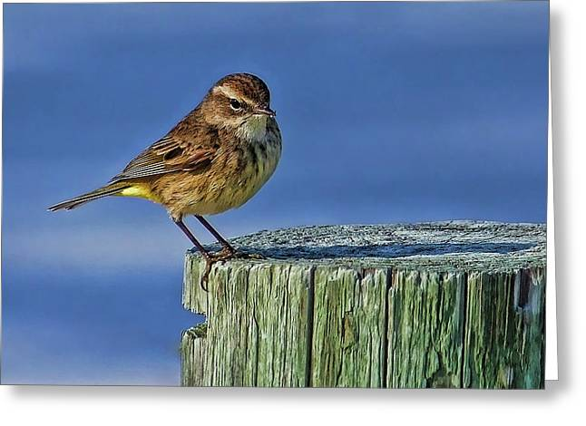 Palm Warbler Greeting Card by HH Photography of Florida