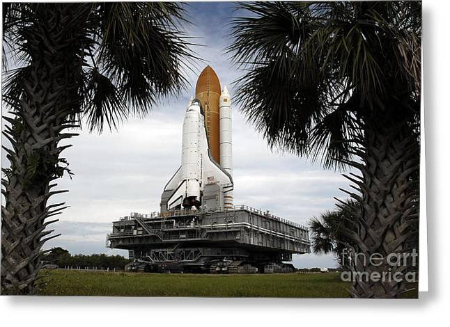 Palmetto Trees Greeting Cards - Palmetto Trees Frame Space Shuttle Greeting Card by Stocktrek Images