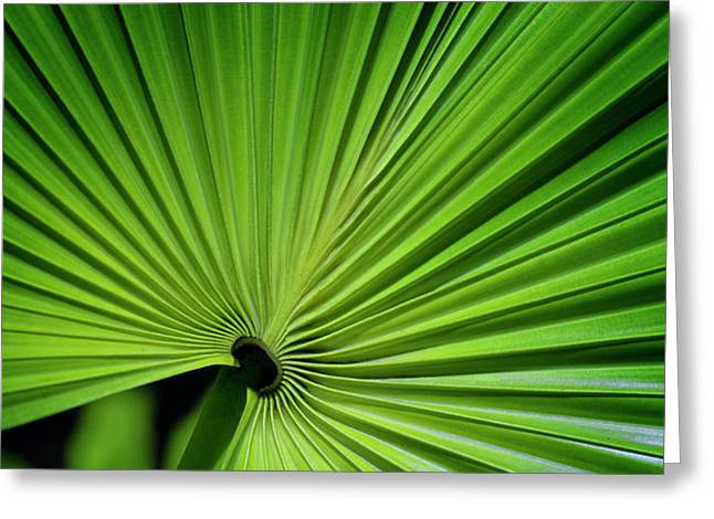 PalmGreen Greeting Card by Al Hurley