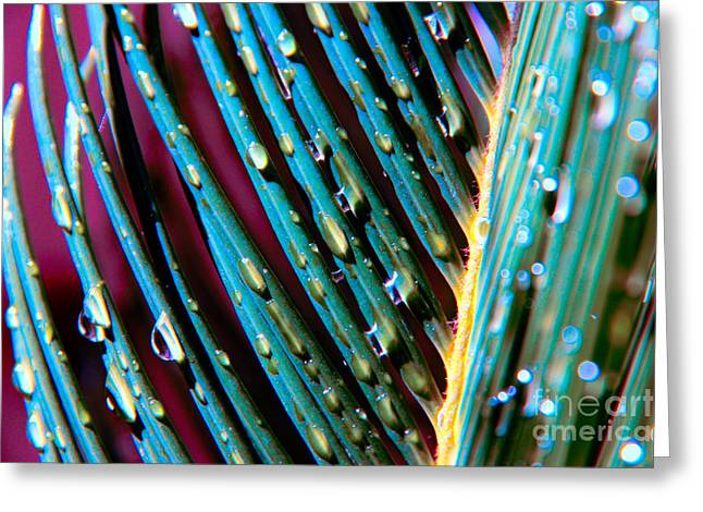Raindrops On Leaves Greeting Cards - Palms after a Rainy Day Greeting Card by Mariola Bitner