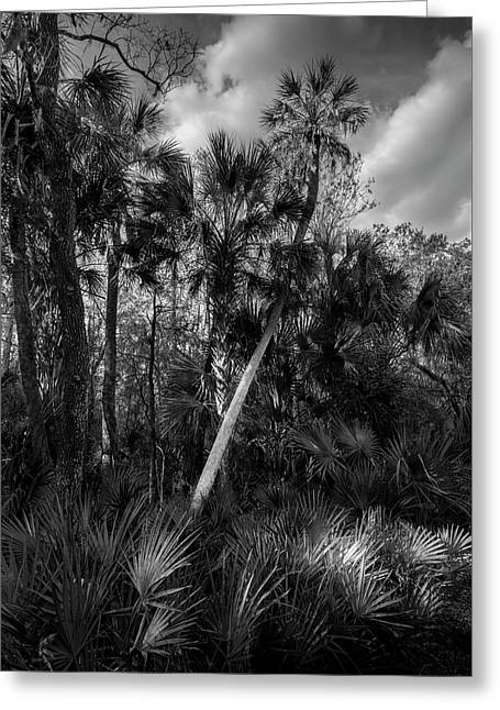Palms And Palmettos Greeting Card by Marvin Spates