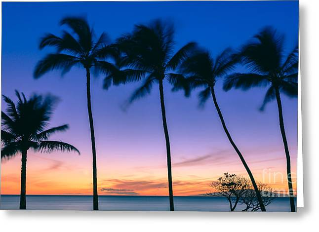 Pacific Ocean Prints Greeting Cards - Palms at Sunset Greeting Card by Henk Meijer Photography