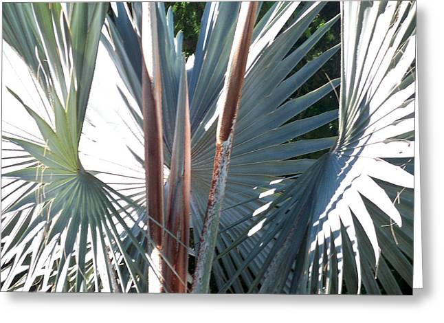 Ocean Plants Greeting Cards - Palms Bursting Greeting Card by Chris Andruskiewicz