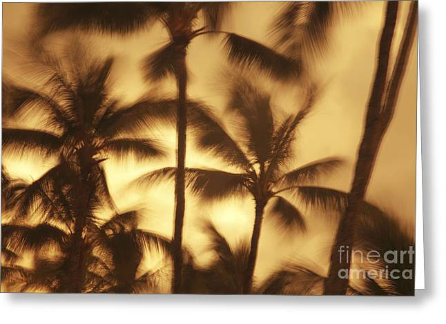 Vince Greeting Cards - Palms in the Wind Greeting Card by Vince Cavataio - Printscapes