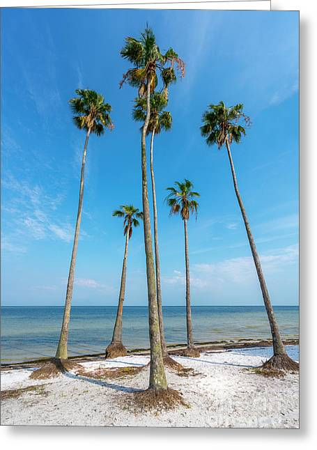 Palms Up Greeting Card by Marvin Spates