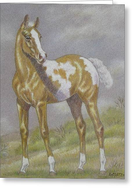 Dorothy Coatsworth Greeting Cards - Palomino Paint Foal Greeting Card by Dorothy Coatsworth