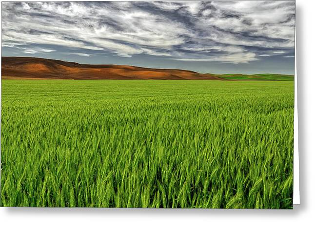 Palouse 3 Greeting Card by Thomas Hall Photography