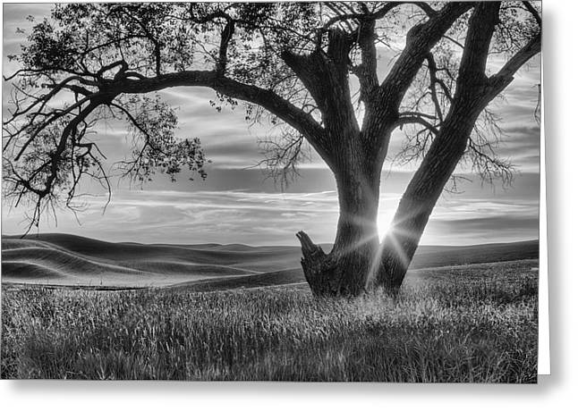 Palouse Sentinel - Black And White Greeting Card by Mark Kiver