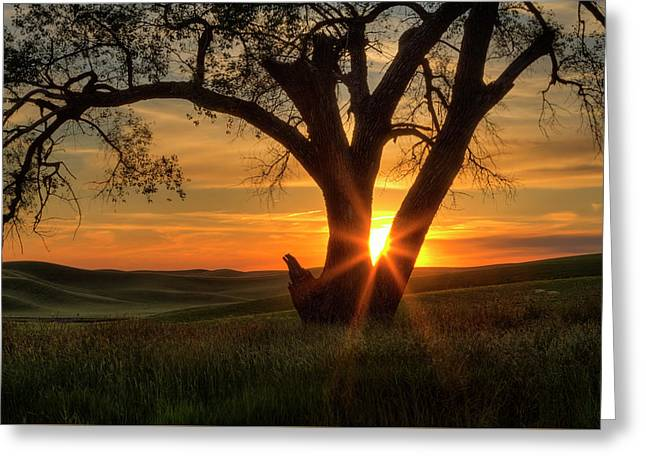 Washington State Greeting Cards - Palouse Sentinel Greeting Card by Mark Kiver