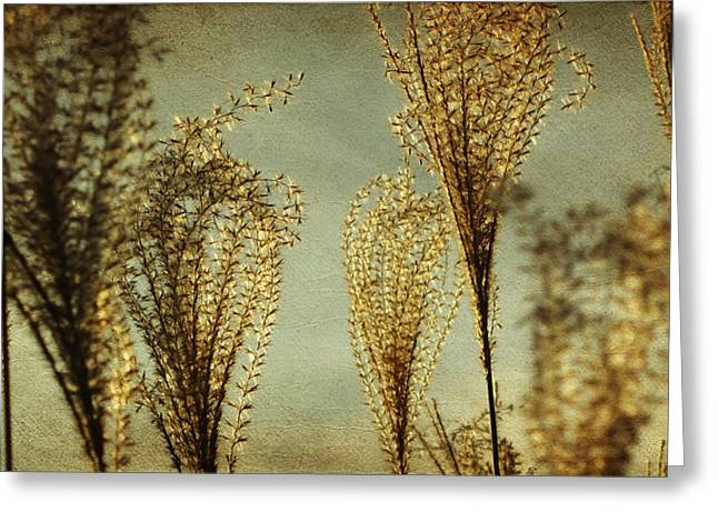 Pampas Grass Greeting Cards - Pampas Grass Greeting Card by Amy Tyler