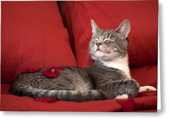 Cat Prints Photographs Greeting Cards - Pampered Pet Greeting Card by Mandy Wiltse