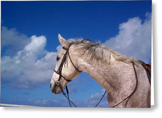 Horse Photographs Greeting Cards - Pancho Greeting Card by Mary-Lee Sanders