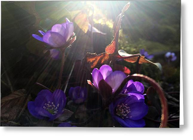 Flowers In Pandora Greeting Card by Renata Vogl
