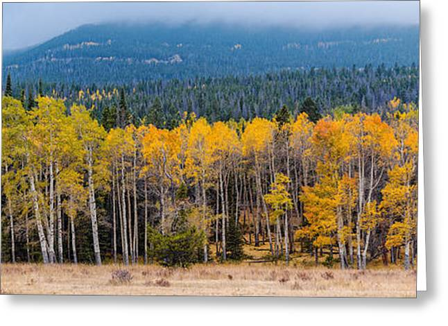 The Mummy Greeting Cards - Panorama of Changing Aspens at Rocky Mountain National Park - Estes Park Colorado Greeting Card by Silvio Ligutti